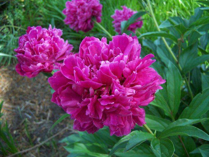 Special Arrangements Florist Garner Nc Flower Shop